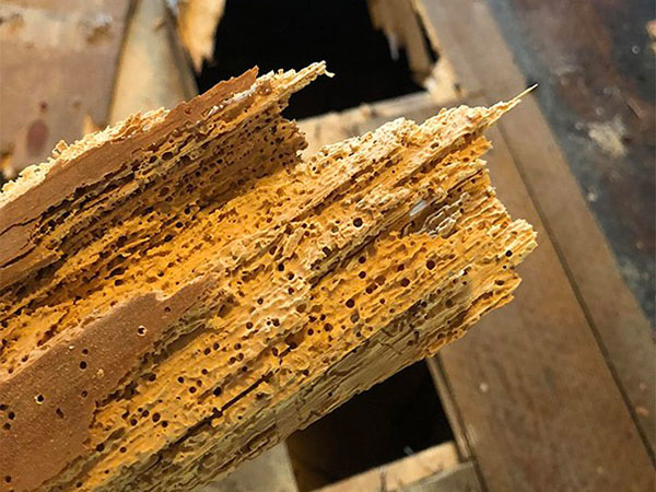 dove-comprare-miglior-antitarlo-per-legno-bologna